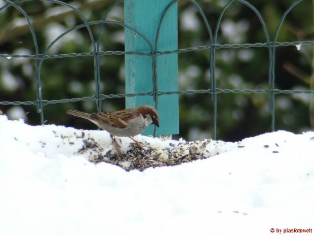 Kleiner vogel beim futtern im winter